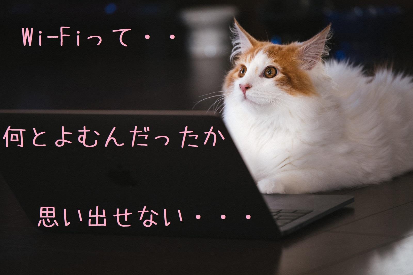 猫とインターネットの画像